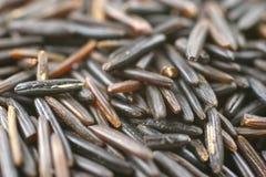 Zwarte rijst Stock Afbeelding