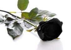 Zwarte rozen op een witte achtergrond Royalty-vrije Stock Afbeelding
