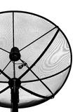 Zwarte satellietschotel Stock Foto