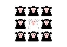 Zwarte schapen en witte schapen Stock Foto's