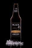 Zwarte schapenaal Stock Afbeeldingen