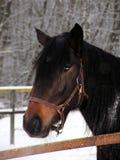 Zwarte schoonheid Royalty-vrije Stock Fotografie
