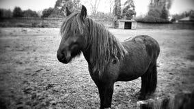 Zwarte schoonheid Stock Foto