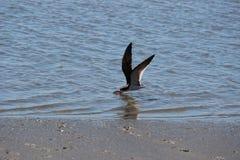 Zwarte schuimspaan visserij Royalty-vrije Stock Afbeeldingen