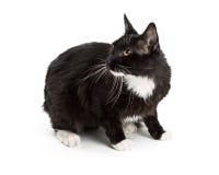 Zwarte Smoking Cat On White Looking Back stock foto's