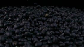 Zwarte sojabonen van stapel stock videobeelden