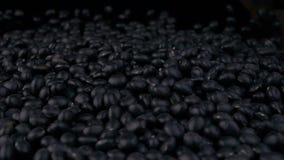 Zwarte sojabonen van stapel stock footage