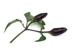 Zwarte Spaanse pepers met bladeren Royalty-vrije Stock Foto's
