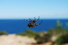 Zwarte spin Stock Foto's