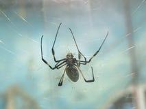 Zwarte spin Stock Foto