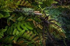 Zwarte spin Stock Afbeeldingen