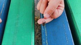 Zwarte spin op de hand van een kind stock footage