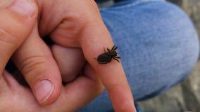Zwarte spin op de hand van een kind stock videobeelden