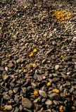 Zwarte steen gouden rotsen Stock Fotografie
