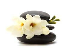 Zwarte stenen en witte bloem Stock Afbeelding