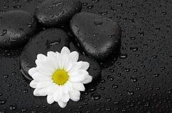 Zwarte stenen en witte bloem Stock Afbeeldingen