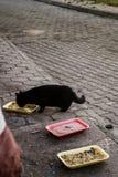 Zwarte Straat Cat Eating Foods dat op Sidewal is verlaten stock fotografie