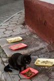 Zwarte Straat Cat Eating Foods dat op Sidewal is verlaten royalty-vrije stock fotografie