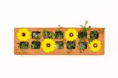 Zwarte theepot met geel en roze bloemenboeket op witte achtergrond Hoogste mening stock afbeeldingen