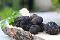 Zwarte Truffel Stock Fotografie