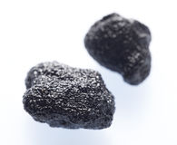 Zwarte truffel Stock Afbeelding