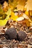 Zwarte truffels royalty-vrije stock foto