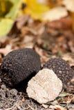 Zwarte truffels stock afbeelding