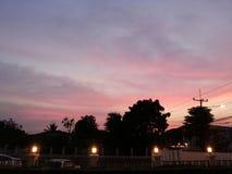 zwarte van de hemel de roze boom stock foto