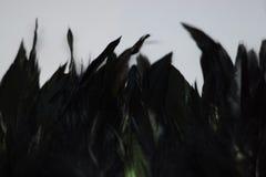 Zwarte veervormige structuur 2 Stock Fotografie
