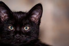 zwarte verdachte kat stock foto's