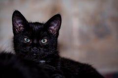 zwarte verdachte kat royalty-vrije stock foto's
