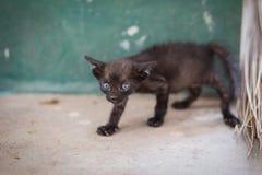 Zwarte verdwaalde kat Royalty-vrije Stock Afbeelding