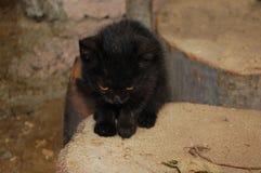Zwarte verdwaalde kat Royalty-vrije Stock Afbeeldingen