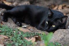 Zwarte verdwaalde kat Stock Foto's