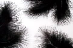 Zwarte veren Stock Fotografie
