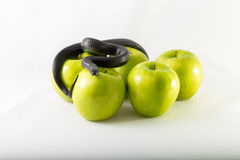 Zwarte verleidingsslang en appelen Royalty-vrije Stock Fotografie