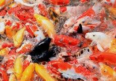 Zwarte vissen Royalty-vrije Stock Afbeelding