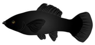 Zwarte Vissen Molly stock illustratie