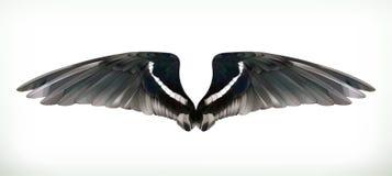 Zwarte Vleugelsillustratie Stock Afbeelding