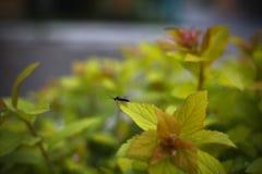Zwarte vlieg op de gele bladeren Stock Fotografie