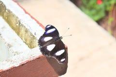 Zwarte vlindersvlieg door de wind en de zonneschijn stock foto