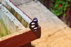 Zwarte vlindersvlieg door de wind en de zonneschijn royalty-vrije stock afbeelding