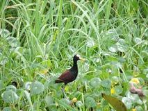 Zwarte vogel bij meer stock foto