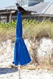 Zwarte Vogel boven op Paraplu Royalty-vrije Stock Fotografie