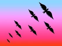 Zwarte vogels Stock Afbeelding