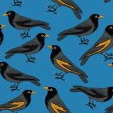 Zwarte vogels met oranje bekken naadloos patroon Vectorillustratie op blauwe achtergrond stock illustratie