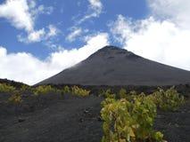 Zwarte vulkaankegel met wijnstokken Stock Foto's