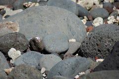 Zwarte vulkanische stenen op zonnig tropisch strand royalty-vrije stock foto
