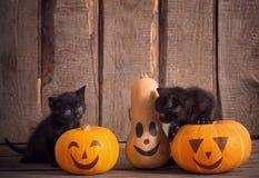 Zwarte weinig kat met Halloween-pompoenen stock foto