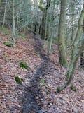 Zwarte windende de winter bosweg op een helling in de donkere winter Stock Foto's